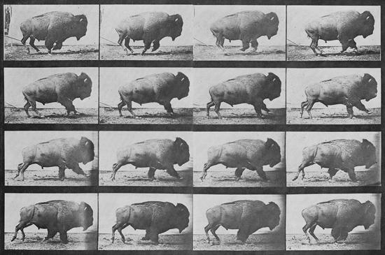 Foto de CRÍTICA: Buffalo Running (1883)