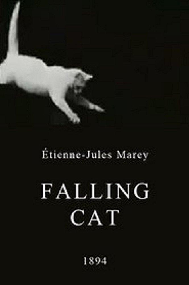 Foto de Falling Cat (1894)  – Crítica