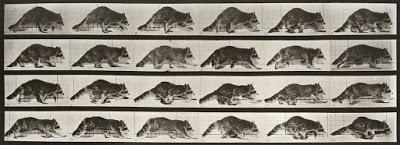 Foto de Crítica: Raccoon Walking (1887)