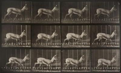 Foto de Crítica: Antelope Trotting (1887)