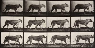 Foto de Crítica:Lioness Walking (1887)