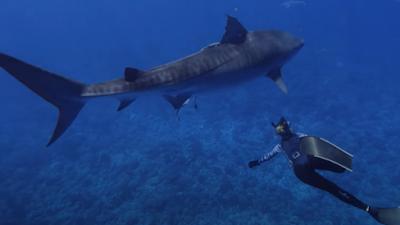Foto de RESUMO DAS NOTÍCIAS DA TV: National Geographic Divulga a Programação do SHARKFEST Deste Ano